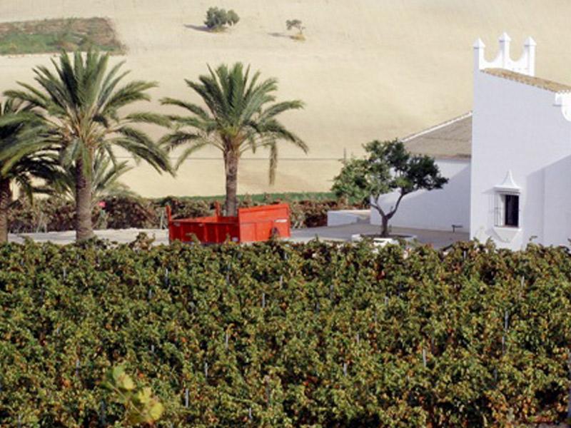 https://winelist.nl/media/cache/16x9_thumb/media/image/article-overview/Fincamoncloa_estate.jpg