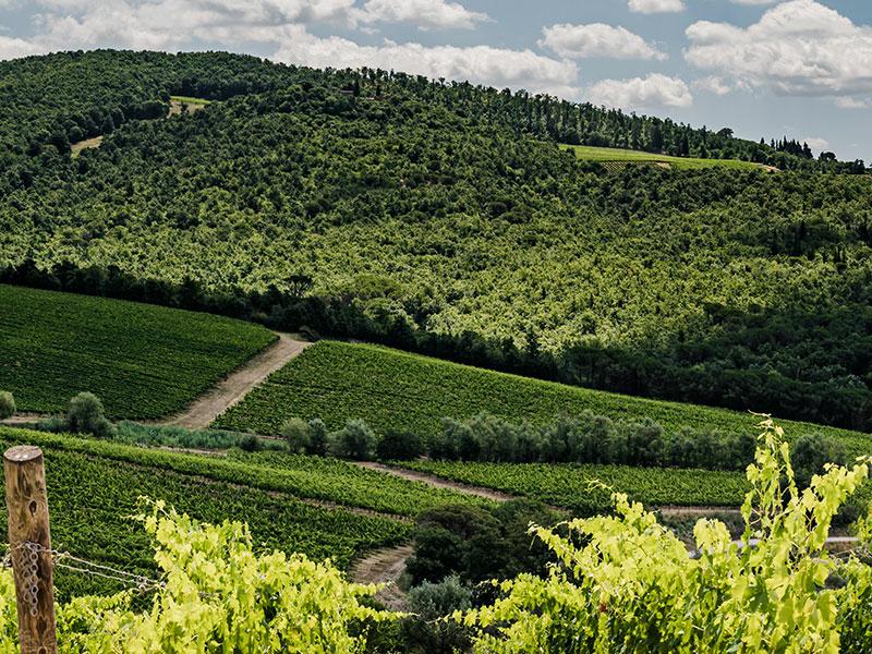 https://winelist.nl/media/cache/16x9_thumb/media/image/brand-banner/Banner-groot_Badia_vineyard.jpg
