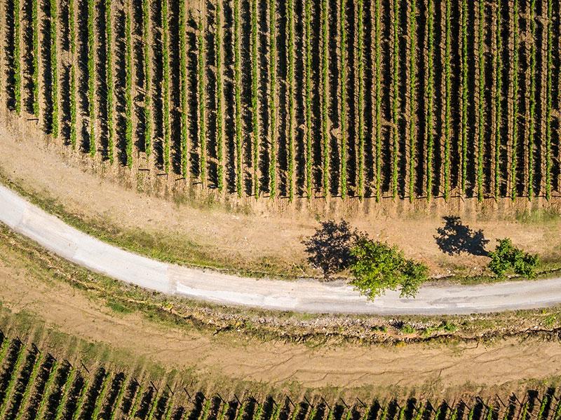 https://winelist.nl/media/cache/16x9_thumb/media/image/brand-banner/Banner_Pian_Delle_Vigne_Estate.jpg