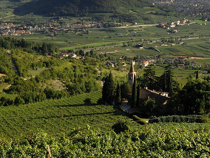 https://winelist.nl/media/cache/16x9_thumb/media/image/brand-banner/BossiFedrigotti_winery.jpg