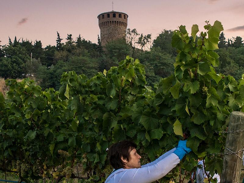 https://winelist.nl/media/cache/16x9_thumb/media/image/brand-banner/CastellodellaSala_wijnoogst.jpg