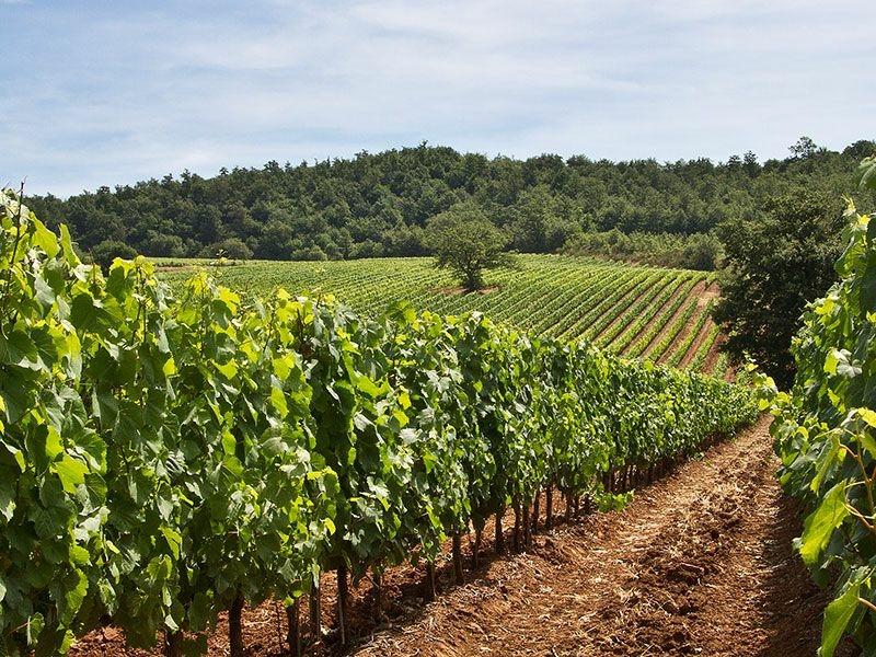 https://winelist.nl/media/cache/16x9_thumb/media/image/brand-banner/Fattoria_aldo_winery.jpg