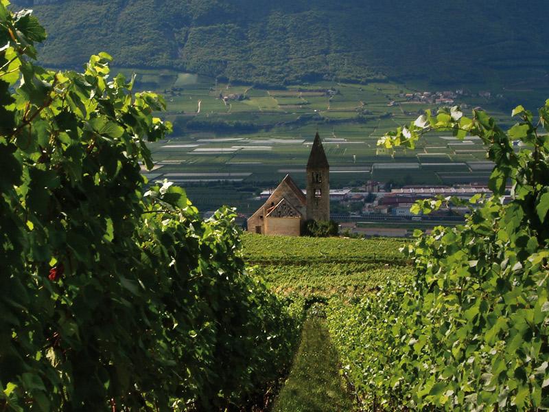 https://winelist.nl/media/cache/16x9_thumb/media/image/brand-banner/FranzHaas_wijn.jpg