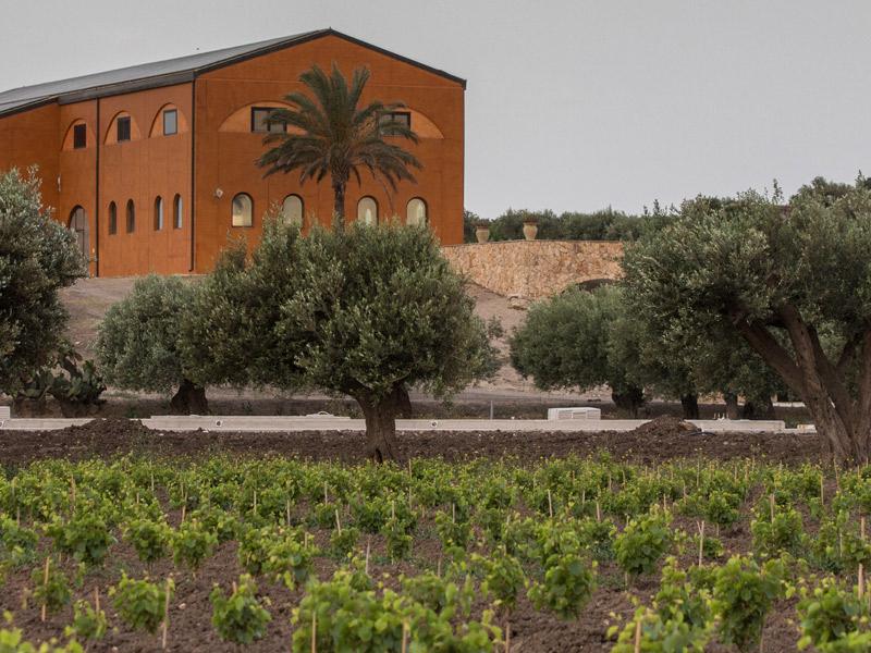 https://winelist.nl/media/cache/16x9_thumb/media/image/brand-banner/Fuedomaccari_estate.jpg