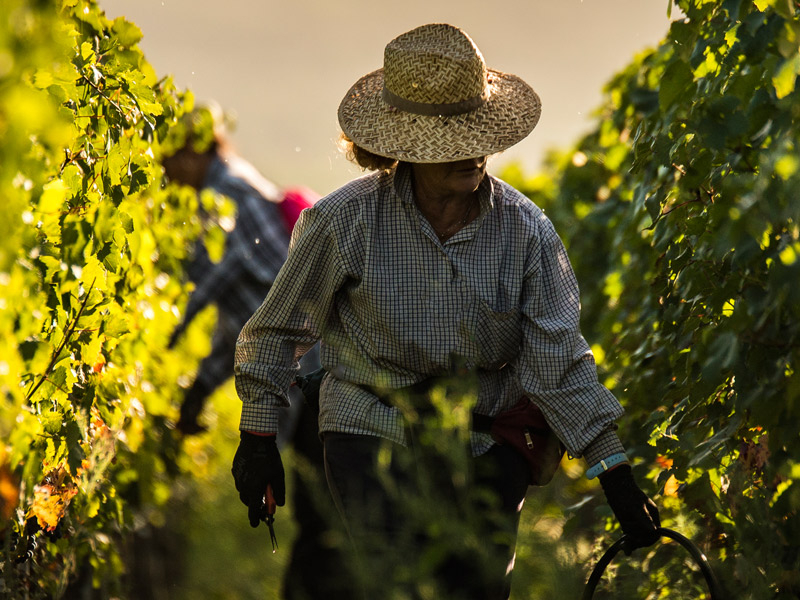 https://winelist.nl/media/cache/16x9_thumb/media/image/brand-banner/GuadoalTasso_wijnstruik.jpg