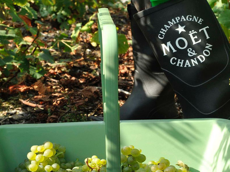 https://winelist.nl/media/cache/16x9_thumb/media/image/brand-banner/MoetChandon_champagne.jpg