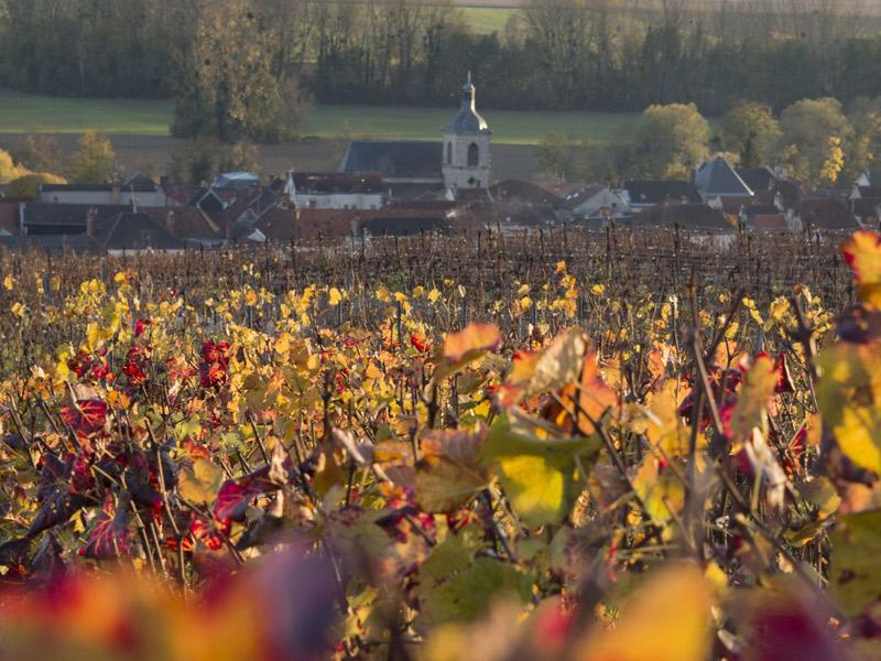 https://winelist.nl/media/cache/16x9_thumb/media/image/brand-banner/NicolasFeuillatte_wijnveld.jpg