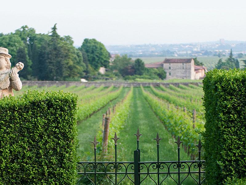 https://winelist.nl/media/cache/16x9_thumb/media/image/brand-banner/Seregho_Alighieri_Estate_Banner_groot_2.jpg