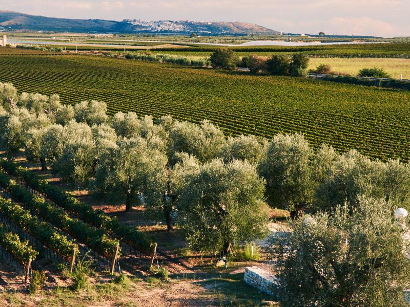 https://winelist.nl/media/cache/16x9_thumb/media/image/brand-banner/Tormaresca_winery.jpg