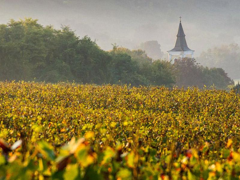 https://winelist.nl/media/cache/16x9_thumb/media/image/brand-banner/Tuzko_wijnhuis.jpg