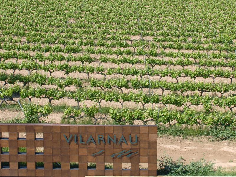 https://winelist.nl/media/cache/16x9_thumb/media/image/brand-banner/Vilarnau_druif.jpg