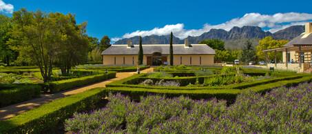 Vergelegen wijntuin