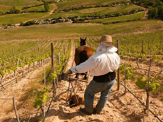 Santa Alvara Winery