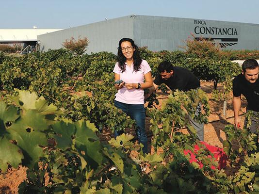 Wijnmakers Finca Constancia 2